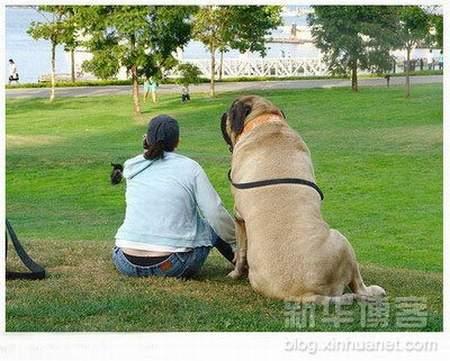 بزرگترين سگ دنيا